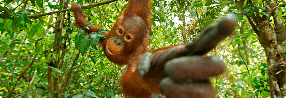 Vrij van palmolie en chemische additieven (E900)